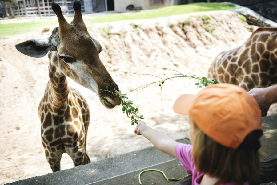 Цирки без тварин: як познайомити дітей зі звірятками