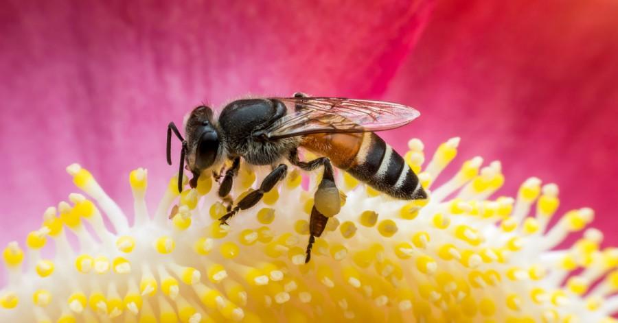 Що робити, якщо дитину вкусила оса або бджола: перша допомога