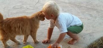 Друг за гроші, або для чого дитині домашня тварина