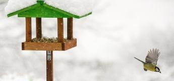 Добрі справи: будуємо годівничку для птахів з дитиною