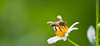 Укуси комах: як надати дітям першу допомогу