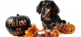 HalloweenDogParty.  Вечiрка для собак