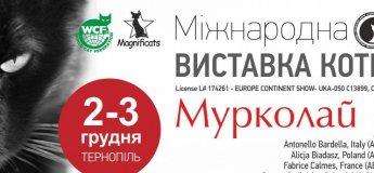 Міжнародна виставка котів в Тернополі